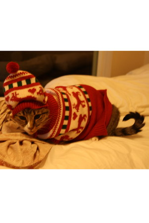 with hat cat clothes sweater
